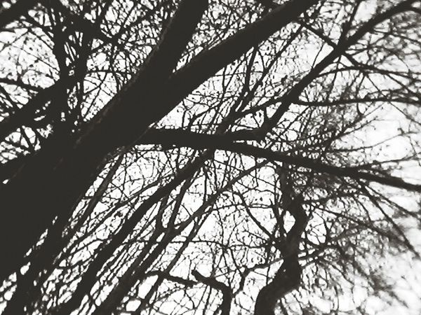 Baum Ast Himmel Taking Photos