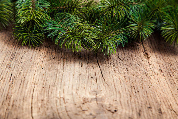 High angle view of fir branches on table