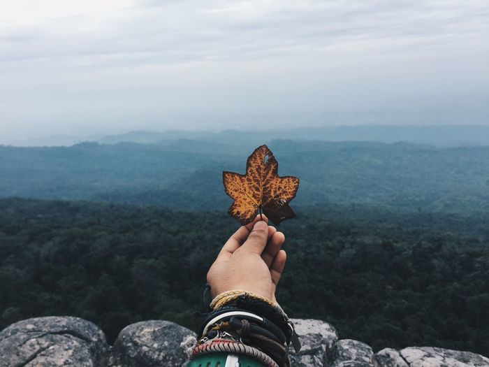 Close-up of person holding maple leaf against sky