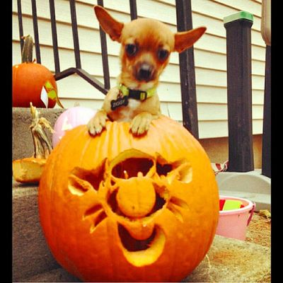 TBT  happy fall Dailyzigga Pupinapumpkin Fall