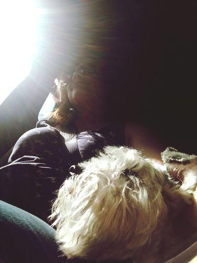 Travel Sunshine Dogfriend Today