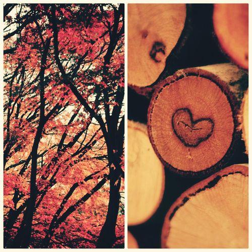 Fall. 📷 Enjoying Life First Eyeem Photo
