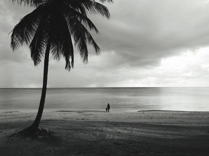 Beach Sea Palm Tree Sand Horizon Over Water Water Cloud - Sky Silhouette Scenics Tranquility Nature Vacations Beauty In Nature People Dominican Republic Black & White Landscape