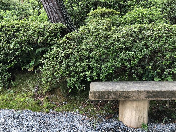Plant Bench Contemplation Park Park - Man Made Space Hedge Wood - Material