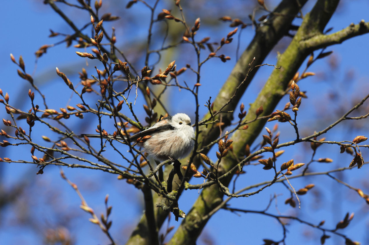 bird, vertebrate, one animal, animal, animal themes, tree, animal wildlife, plant, animals in the wild, perching, low angle view, branch, no people, day, nature, focus on foreground, sky, outdoors, beauty in nature, selective focus