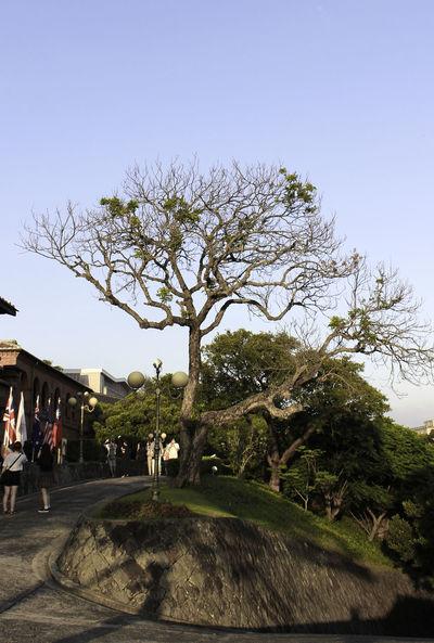 Adult Clear Sky Day Ford Sanmingo Fordsanminggo Nature Outdoors People Sky Taipei Taiwan Tree Tree Tumsui