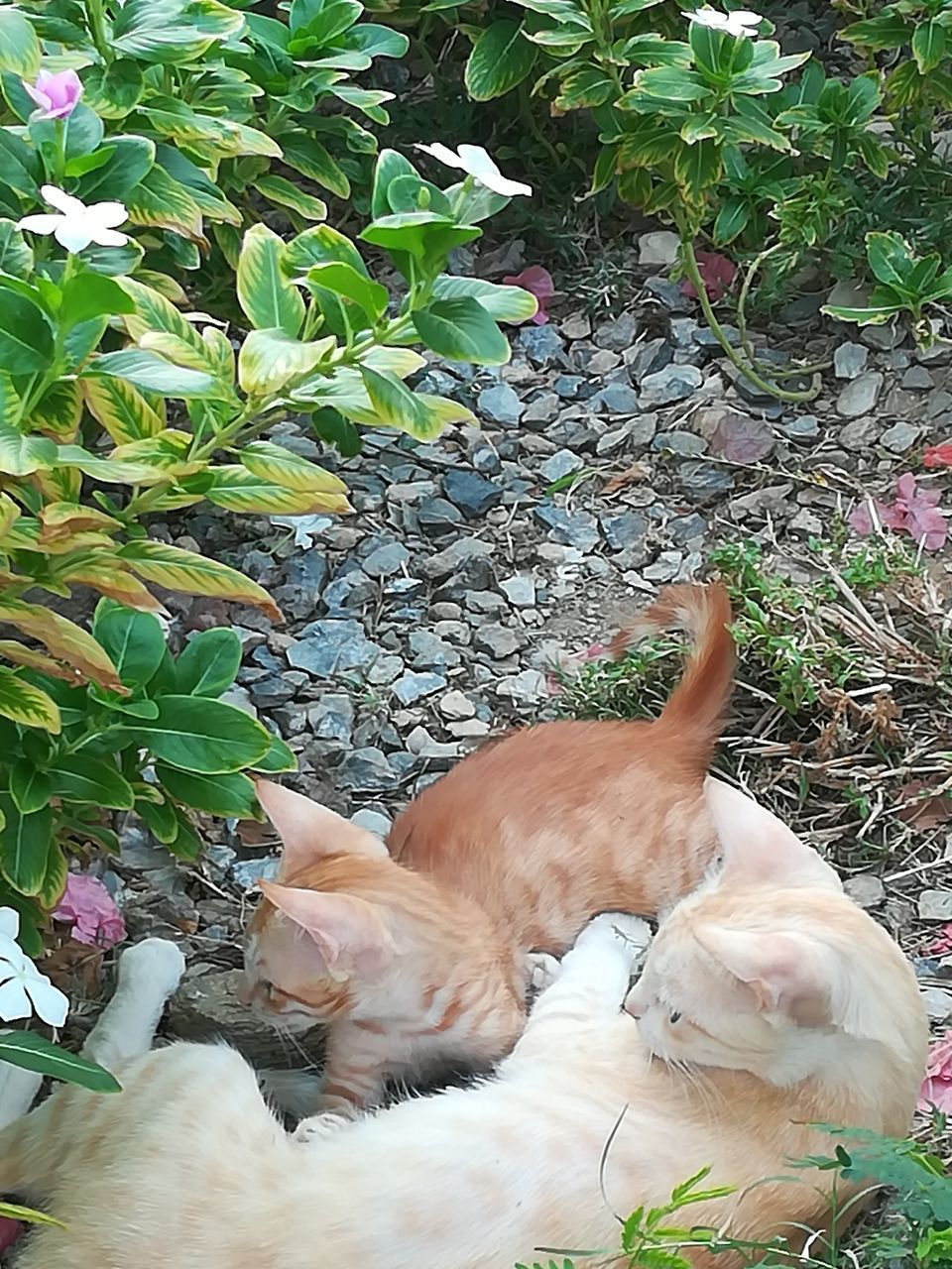 domestic, domestic animals, pets, mammal, one animal, animal themes, vertebrate, animal, domestic cat, cat, feline, plant, no people, dog, canine, day, nature, relaxation, plant part, leaf, ginger cat, whisker