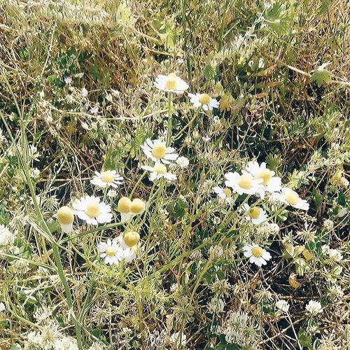 Cuma'nız mübarek olsun/Îna we bimbarek be..🌼💐 Hayırlıcumalar Papatyalar❤️ Flowers Baharbahce