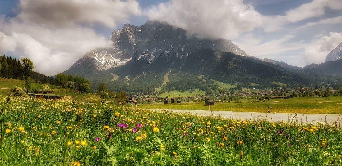 Bavaria Zugspitze Alps Fotoexpeditionen Rwfart Galaxys8 Eyeemphotography Mysterious Germany Magic Moments EyeEmNewHere Flower Mountain Water Tree Flower Head Irrigation Equipment Rural Scene Springtime Field Spraying Wildflower Botany