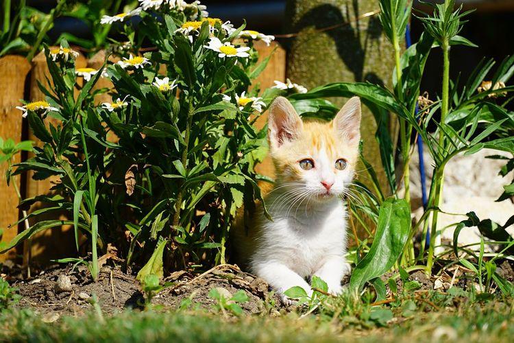 Portrait of cat sitting in field