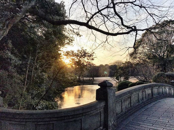 Tree No People Nature Built Structure Bare Tree Architecture Beauty In Nature Outdoors Branch The City Light Day Bridge Tranquil Scene Scenics Park Japan Photography Sunset Sunset_collection Tokyo EyeEmJapan Lake Winter Colors Tree Lake View Beauty In Nature The City Light