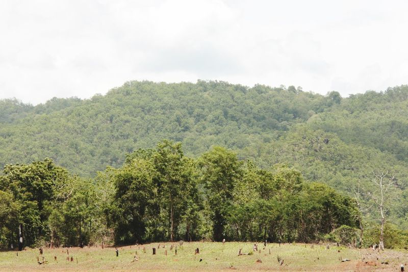 Forest Landscape No People Outdoors in North Thailand South East Asia
