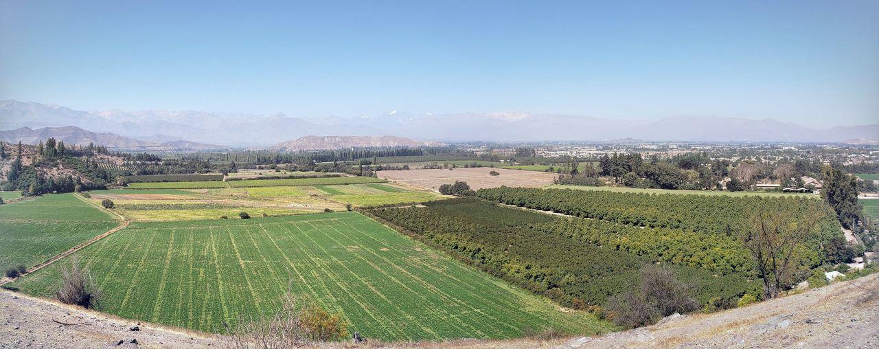 Tea Crop Rural