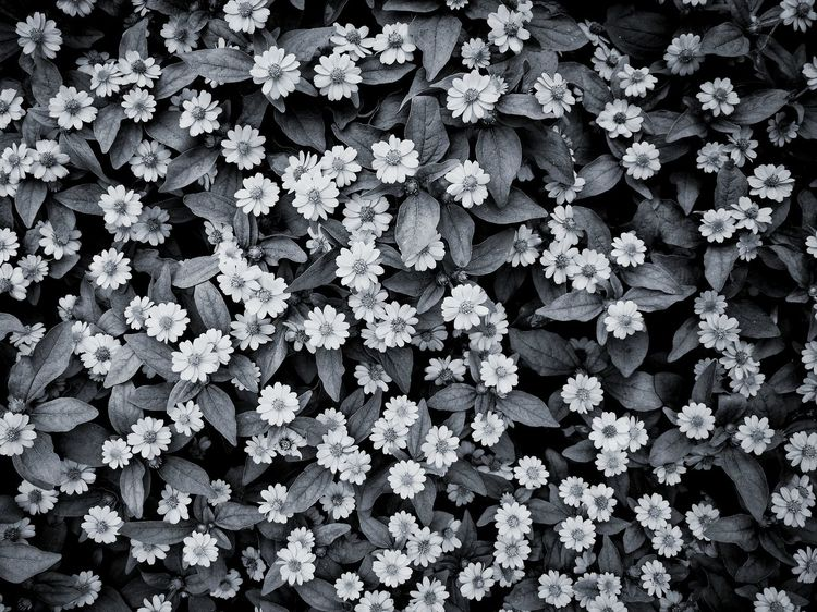 Shanghai,China China Flower Backgrounds Full Frame Winter Leaf High Angle View Close-up Plant Blooming Leaves Flower Head Hydrangea Passion Flower Fall Cosmos Flower In Bloom