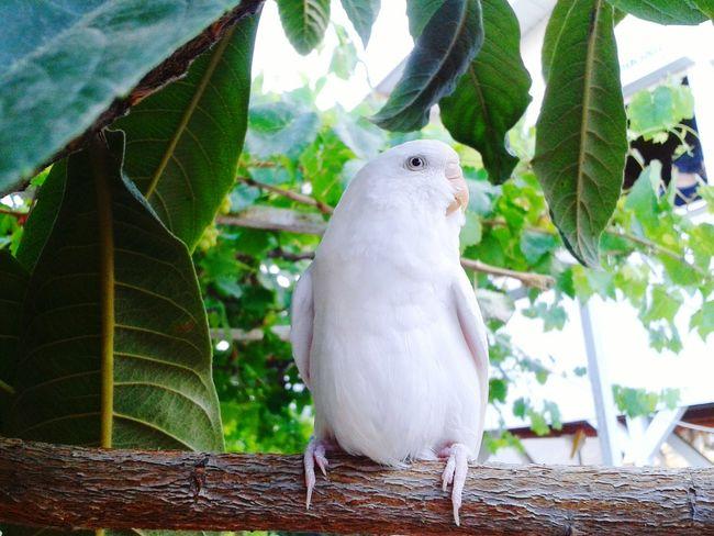 Smart girl Taking Photos Bird Photography White EyeEm Nature Lover Birds_collection EyeEm Selects The Week On EyeEm Pet Portraits
