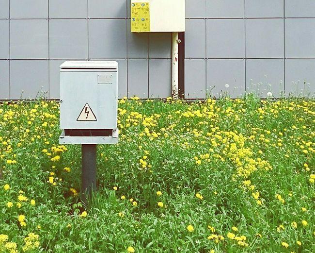 Mobilephotography Streetphotography Urban Geometry Urban Nature Dandelions