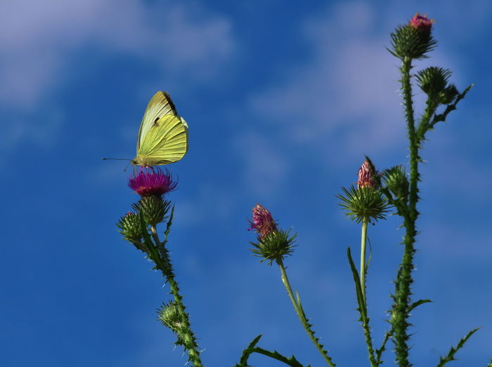Close-up of insect on flower against blue sky