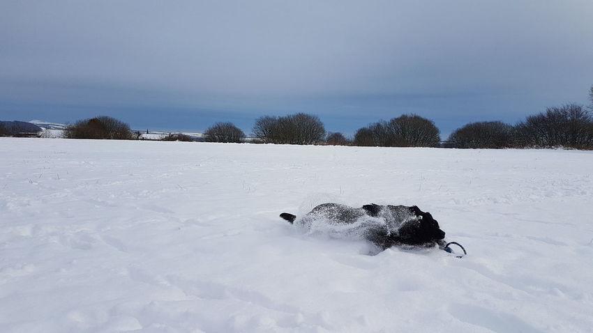 EyeEm Selects Snow Cold Temperature Winter Animal One Animal Animal Themes Animal Wildlife
