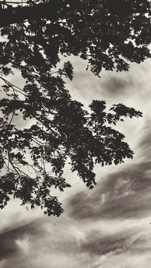 Tree Sky Nature Cloud - Sky Beauty In Nature Branch Outdoors Scenics Day No People Beauty In Nature Nem Nature árbol Mistic Atmosphere Trees Beautiful Nature Tree_collection  TreePorn Nature Photography Tree_collection  Nature_collection The Great Outdoors– 2017 EyeEm Awards EyeEm Nature Lover Trees And Sky The Great Outdoors - 2017 EyeEm Awards