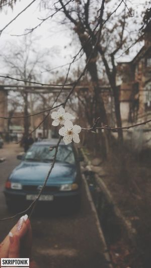 first day of spring #flower  #trees
