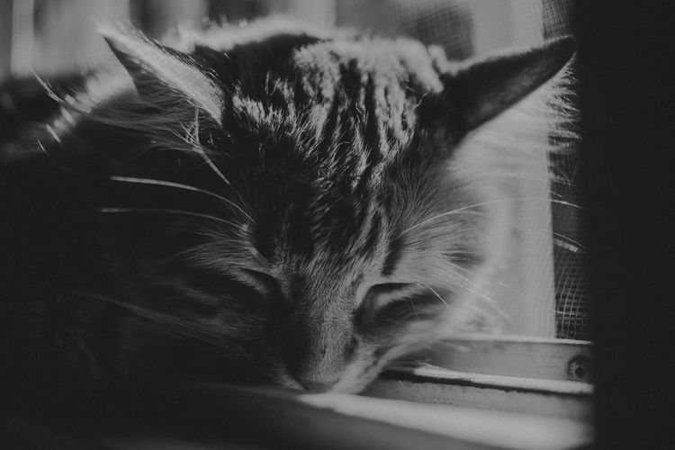 Mammal Domestic Domestic Animals Pets Cat Animal Domestic Cat Feline Animal Themes One Animal Vertebrate Indoors  No People Close-up Relaxation Home Interior Whisker Selective Focus Looking Looking Away Animal Head