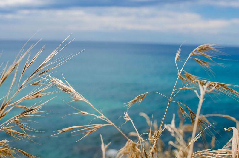 Close-up of stalks against calm blue sea