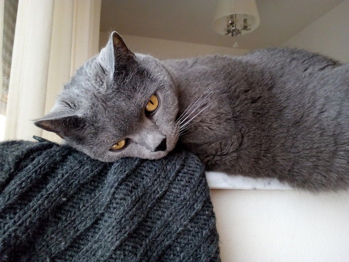 my cat Cat Cats Home Home Interior Homemade Cat Animal Eye At Home Pet Clothing Home Adult Animal Stray Animal Pet Bed Snout