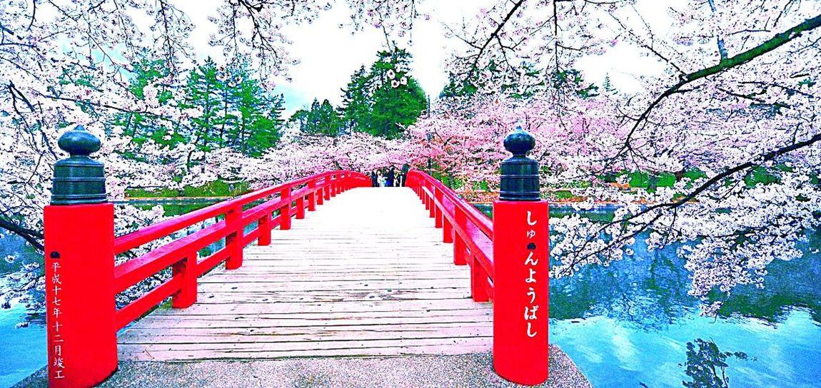 Cherryblossom Flower Bridge Water Collors Skye