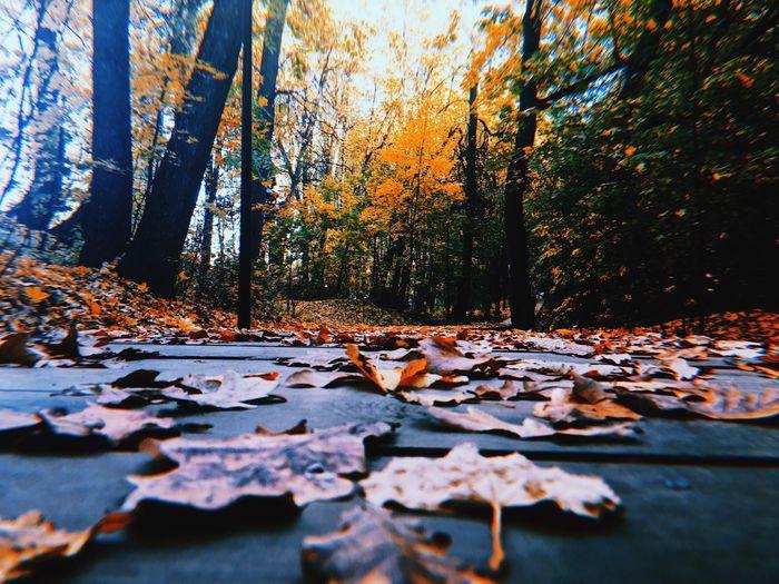 Autumn leaves on fallen tree
