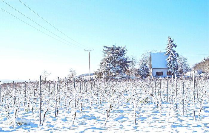 Winter Wonderland Winter Winter2014 Winterishere Winterisokay Shareyourwinter Winterscenes Winterlandscapes Winterland Wintertime
