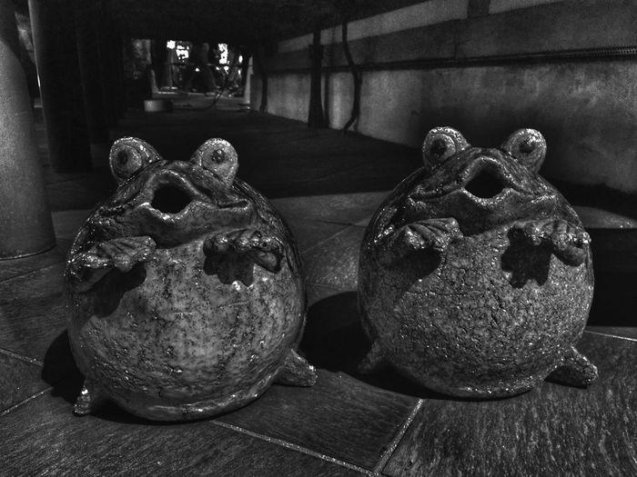 Blackandwhite Frog Monochrome