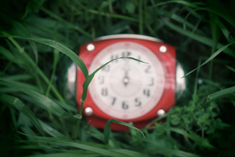 Close-up of clock on grass