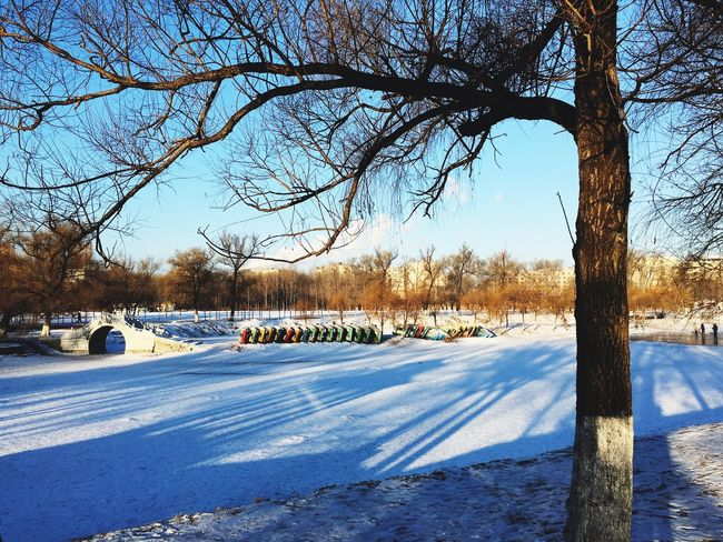 Taking Photos Winter Sunshine Snow Lakeside Park Trees Good Morning It's Cold Outside
