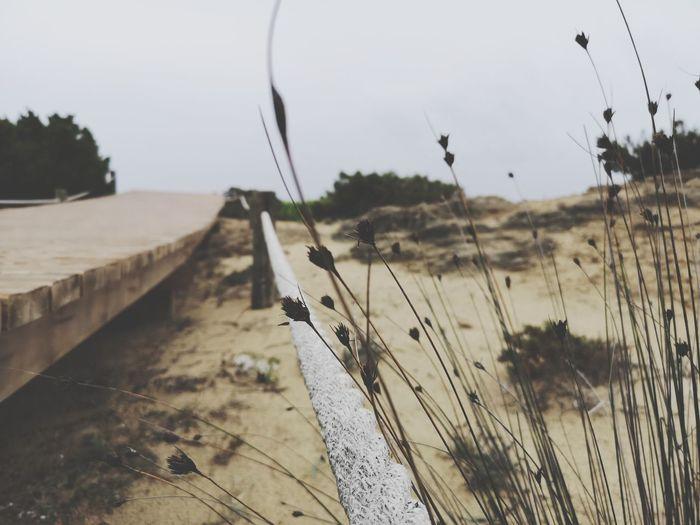 Playa. Lovesummer Loveislove Cludy Plant Life Strange Flowers Huawey FormenteraIsland Nofilters EyeEmNewHere EyeEm Best Shots Perfect Day Wildnature Landscape Water Beach Sand Sand Dune Sky Close-up Tranquil Scene Calm Scenics Non-urban Scene Idyllic Tranquility Summer In The City