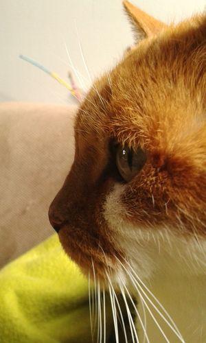 Meisje Cat Cute