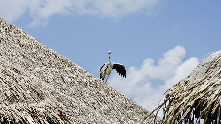 Low Angle View Of Heron Perching On Roof Against Sky