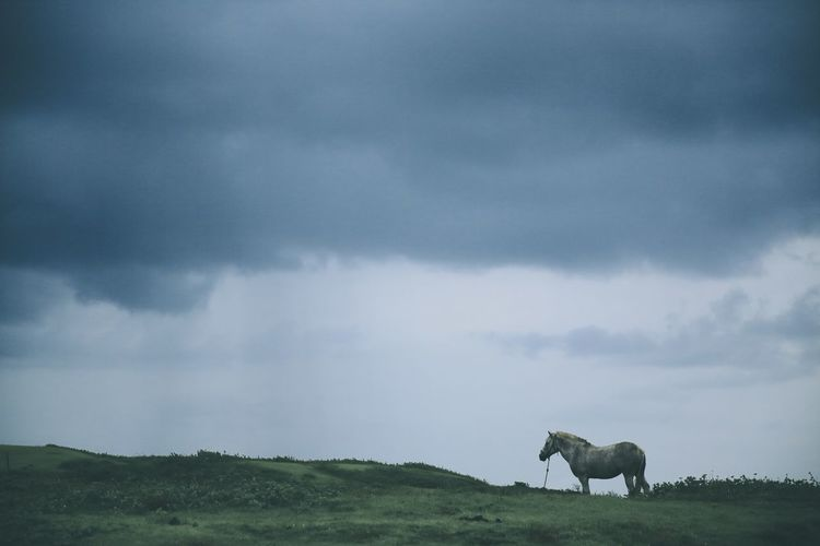 Horse On Grassy Field Against Cloudy Sky