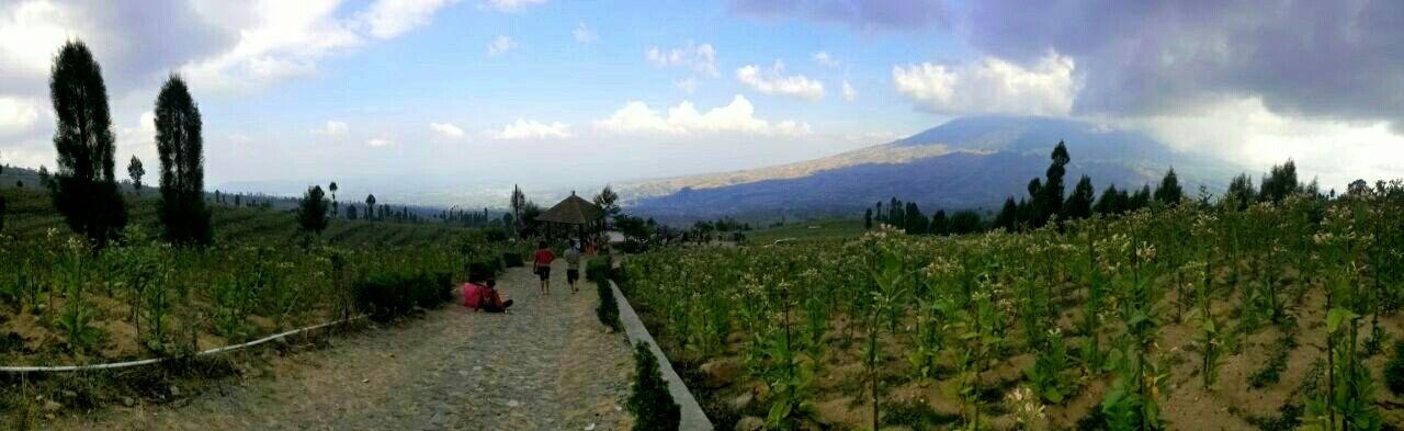 Relaxing posong Picnic Tobaccoflower INDONESIA Temanggung Mountain Nature Panoramic Photography Panorama Landscape