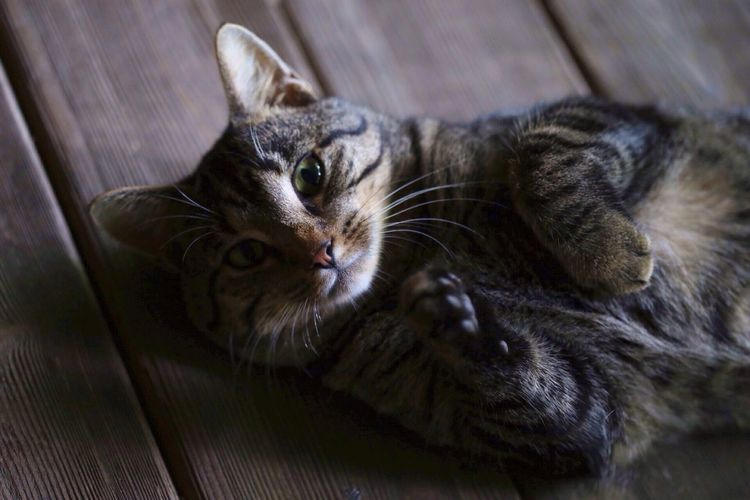 Cat Cute Cat Cat Posing Cat Photography Cat Portrait Cats