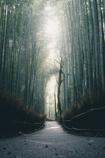 onward // IG: @taromoberly Direction The Way Forward Forest Road Tranquility Nature No People Beauty In Nature Sunlight Tranquil Scene Footpath Bamboo - Plant Outdoors Bamboo Grove Japan Japan Photography Japanese  Japanese Culture Kyoto Arashiyama Bamboo Forest Diminishing Perspective Non-urban Scene