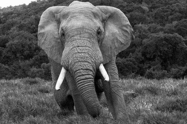 Full length of elephant in sunlight