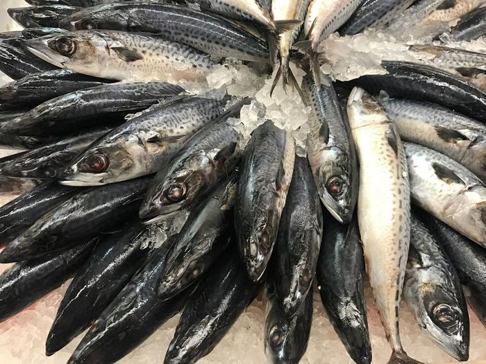 Close-up of mackerel fish in market