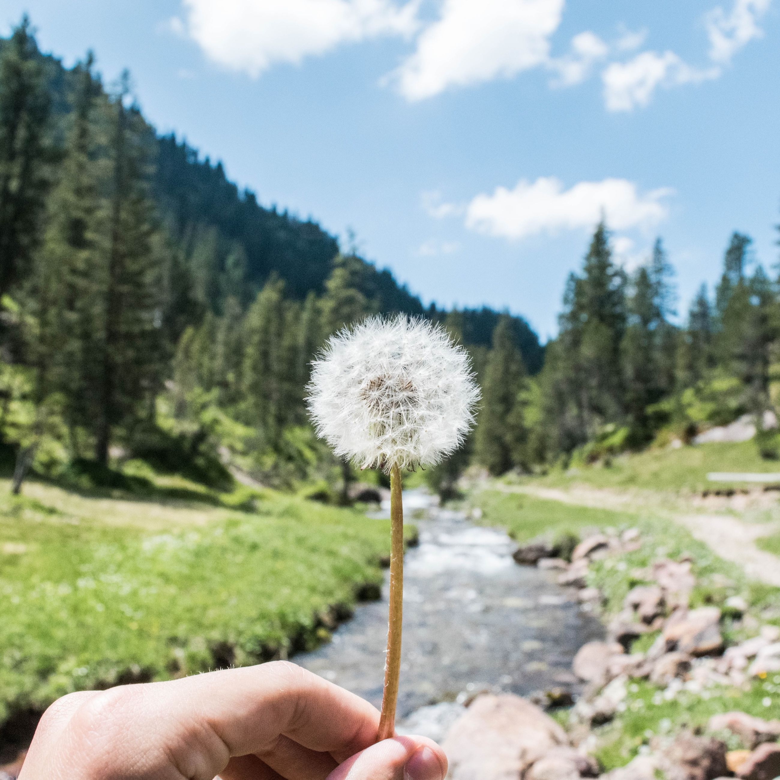 dandelion, person, flower, holding, fragility, single flower, freshness, growth, white color, nature, beauty in nature, flower head, focus on foreground, part of, close-up, stem, sky
