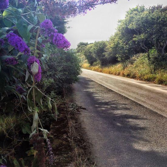 Flowers Road