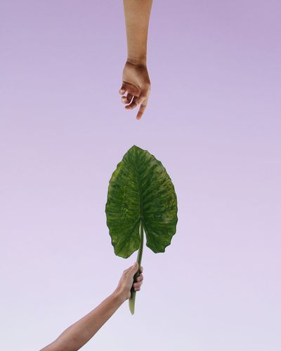 Person holding leaf against white background