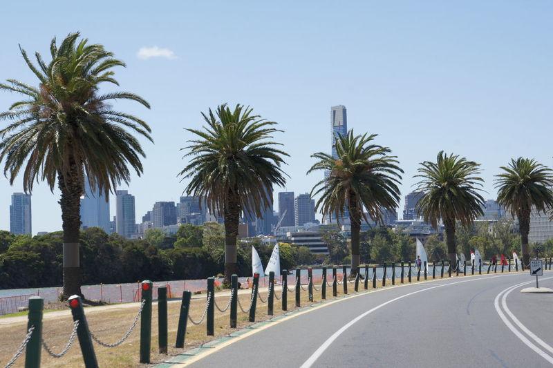 Palmtrees Road Cityscape Albert Park Lake Melbourne City Summer Windsurfer Travelphotography
