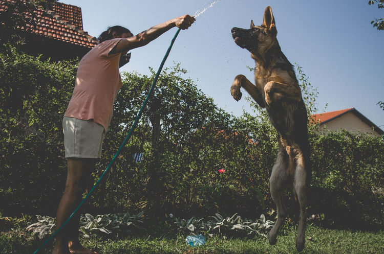 Crazy Dogs Day Dog Domestic Animals Full Length German Shepherd Grass Nature One Animal Outdoors Pets Real People Sky Standing Tree