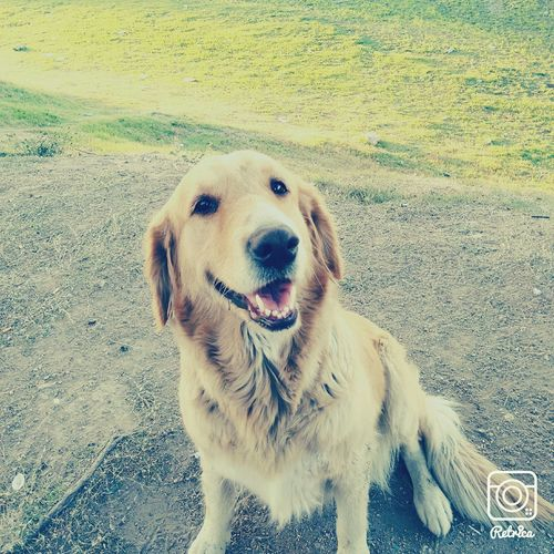 Dog Pet Dogslife