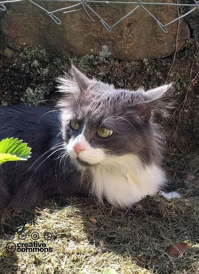 Domestic Cat Pets One Animal Feline Animal Theme Miau *-*  Neko Kot Gatto Cat♡ No People TheVille Streamzoofamily Shadows & Lights I Love My Cat ❤ Love My Cat❤❤❤🐱🐱🐱 Looking Around In The Garden Cats Of EyeEm Cat Lovers