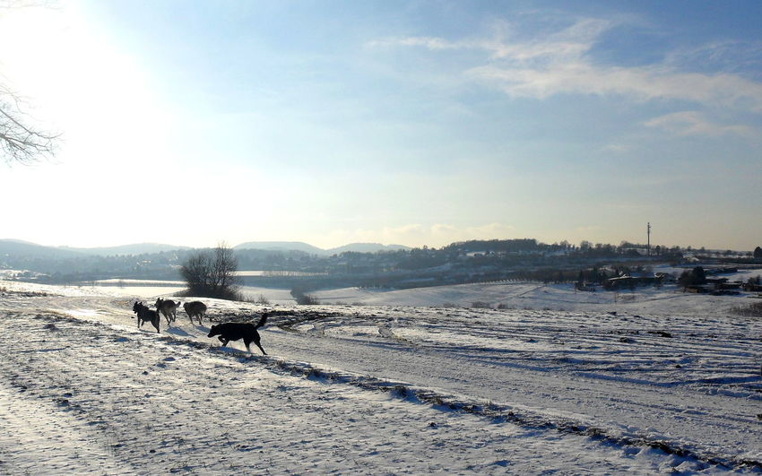 Winterfun Animal Themes Beauty In Nature Cold Temperature Day Dogs Dog❤ Domestic Animals Mammal Mode Of Transport Nature No People Outdoors Sky Snow Transportation Winter Winterfun